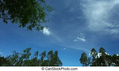 Tropical Climate Time Lapse Skyline With Treetops - Tropical...