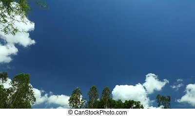 Tropical deep blue sky time lapse with vibrant green tree tops and light cloud formations.