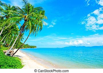 Tropical coast, beach with hang palm trees