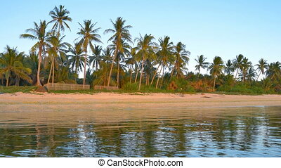 Tropical coast in the evening