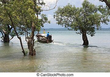 Tropical coastal landscape