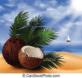 tropical, coco, fruta, nuez
