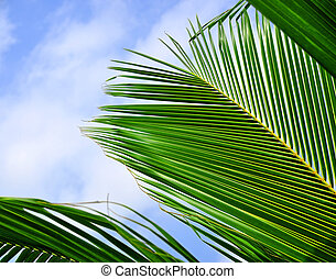 Tropical Coconut Leaves