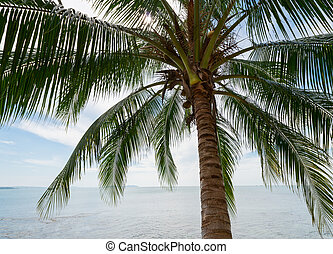 Tropical coconut palm on the sea