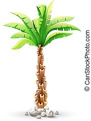 Tropical coconut palm tree with green leaves