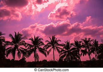 Tropical coconut palm trees silhouettes at sunset