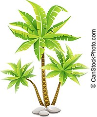 Tropical coconut palm trees with green leaves