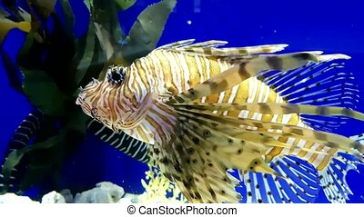 Tropical colorful fishes swimming in aquarium