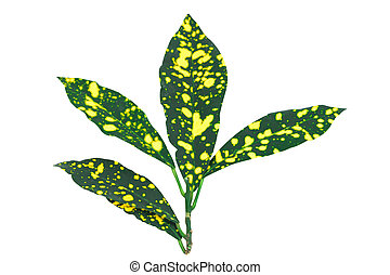 Tropical colorful leaves on white background. Top view.