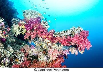 tropical, colorido, arrecife
