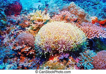 tropical, colorido, arrecife, paisaje