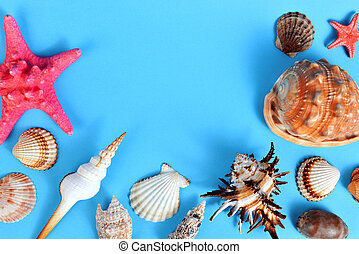 Tropical conch shells with starfish.