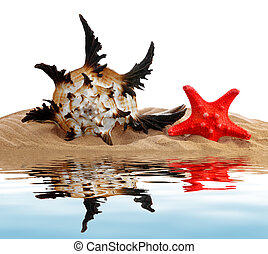 tropical, conchas de mar
