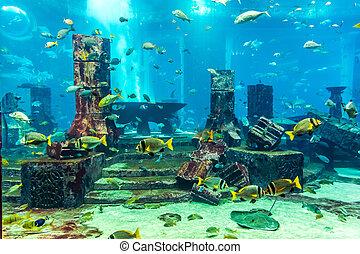 tropical, coral, pez, acuario, arrecife