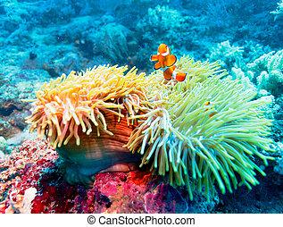 tropical, coral, pez, arrecife, colorido