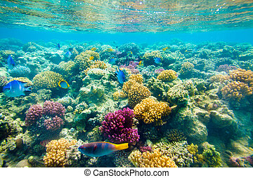 tropical, coral, reef., mar, rojo