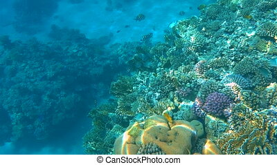 Colorful tropical coral reef. Underwater fishes and corals in Ras Mohamed national park Sharm el Sheikh, Egypt