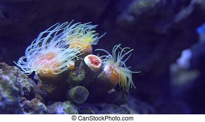 Tropical Coral reef, Underwater life. Anemones and Soft Corals, Vibrant Colors.