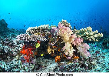 tropical, corales, colorido, arrecife
