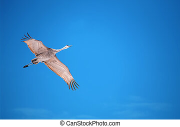Tropical crane over light blue sky