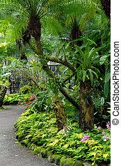 tropical, curvar, jardín