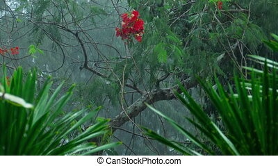 Tropical downpour outdoors - Tropical downpour in the...