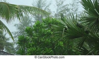 Tropical downpour, slow motion