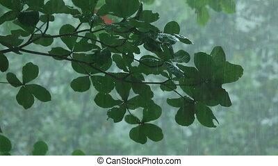 Tropical downpour