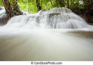 tropical eső erdő, vízesés