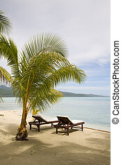 tropical exotic beach with palmtrees
