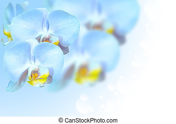 Tropical exotic blue orchid flowers over gradient