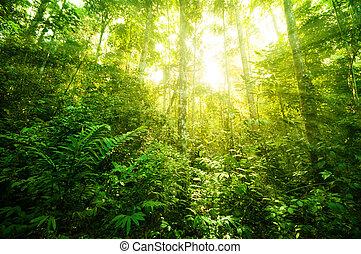 tropical, fantástico, selva
