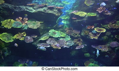 Tropical fish and colorful coral reef in the aquarium