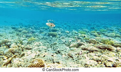 Tropical fish and colorful coral reef underwater shot. Red...