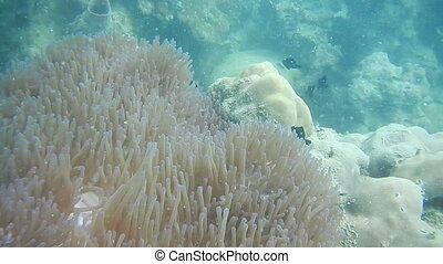 Tropical fish and coral close up in Cambodia sea