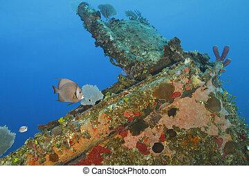 Gray Angelfish and Foureye Butterflyfish swimming over a coral encrusted shipwreck - Roatan, Honduras