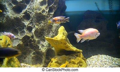 tropical fish and corals in aquarium undervater