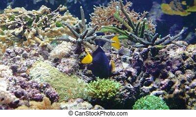 Tropical fish and corals in the Berlin aquarium
