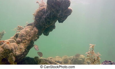 Tropical fish and rock and coral formation Florida Keys -...