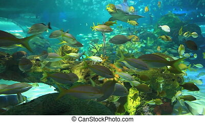 Tropical fish and sharks - Colorful coral encrusted reefs...