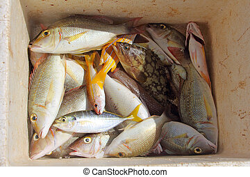 Tropical fish catch