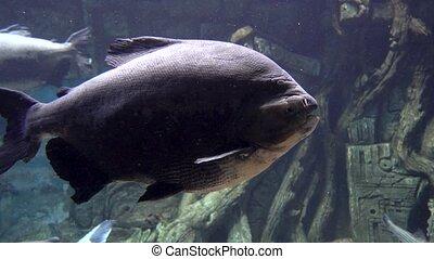 Tropical Fish Close Up Underwater Bright Color Aquatic Life.