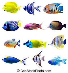 Tropical fish collection
