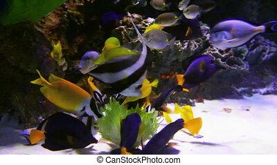 tropical fish feeding underwater