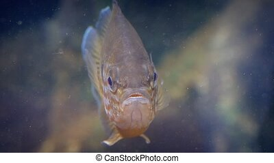 Tropical Fish Floats Then Swims Off - Exotic colorful fish...