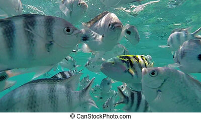 Tropical Fish in Mauritius