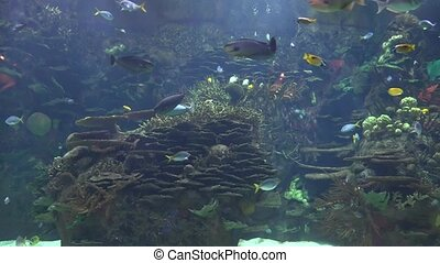 Tropical Fish In Tank