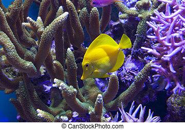 Tropical Fish in the Aquarium.