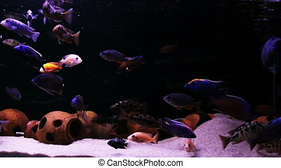 Tropical fish in the aquarium