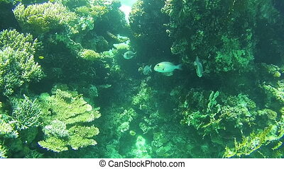 Tropical Fish in the Red Sea. Egypt